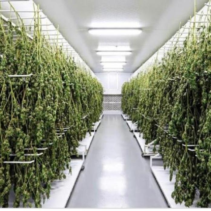 تولیدکنندگان سبزی خشک